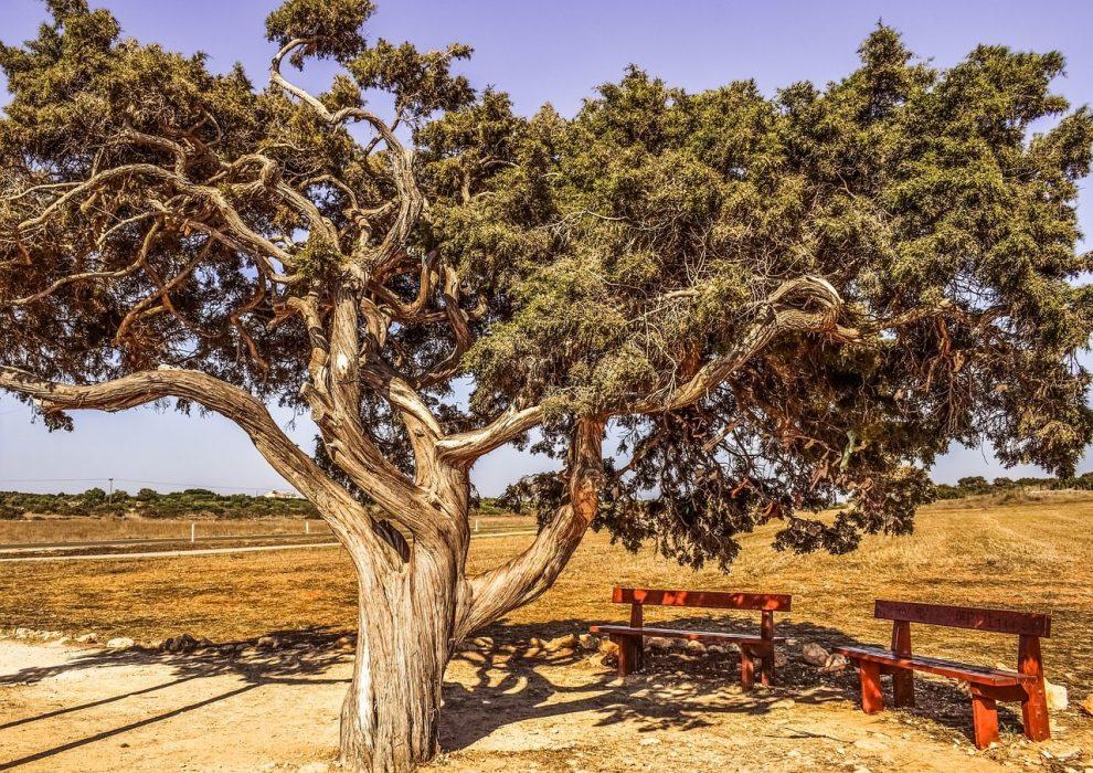 Дерево желаний. Кипр.