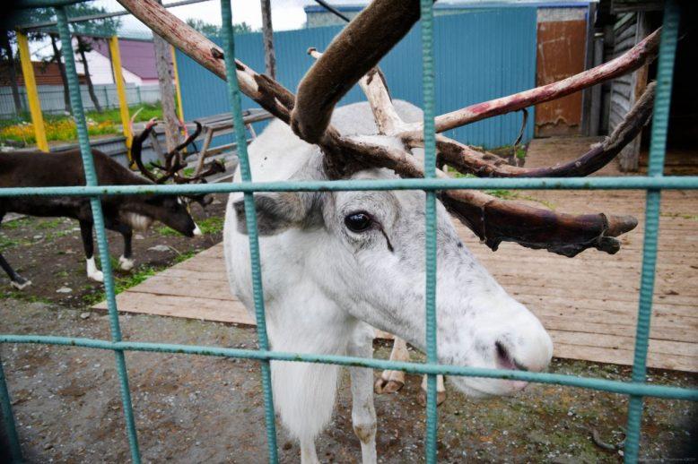 камчатский зоопарк