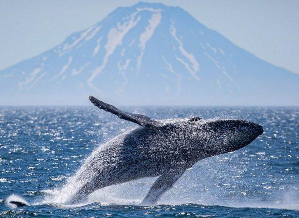 кит камчатка