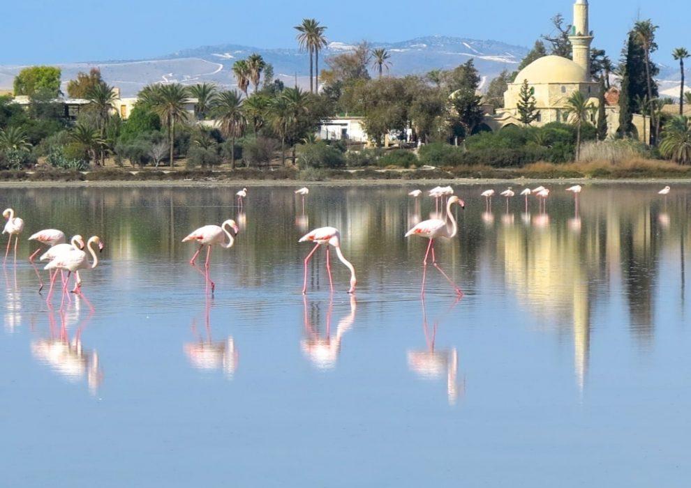 Соленое озеро в Ларнаке. Кипр.