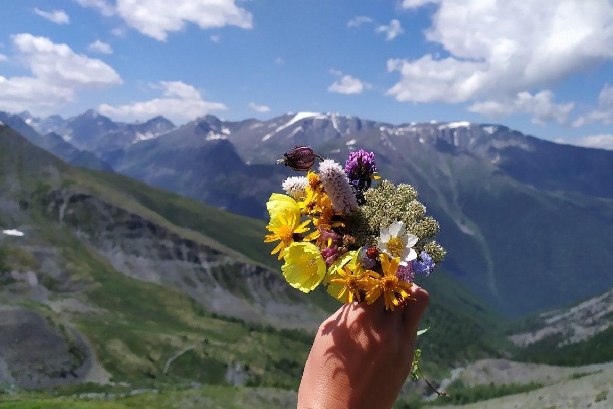 Собираем алтайские цветы по дороге