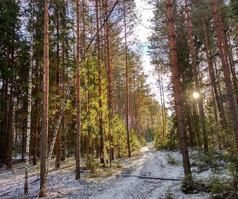лес-min