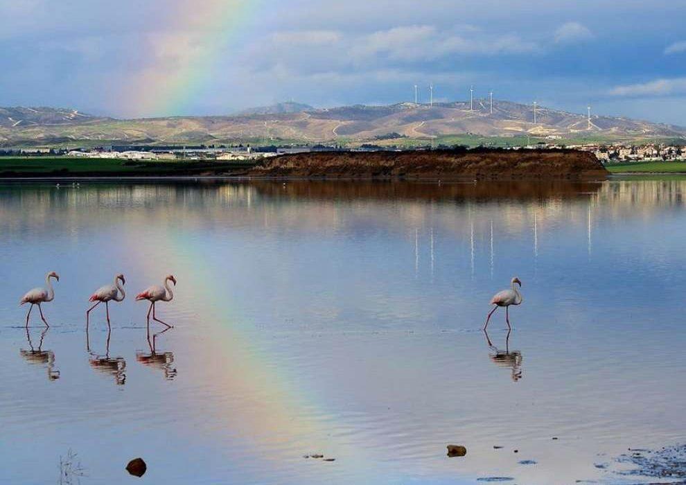 Кипр. Ларнака. Соленое озеро.