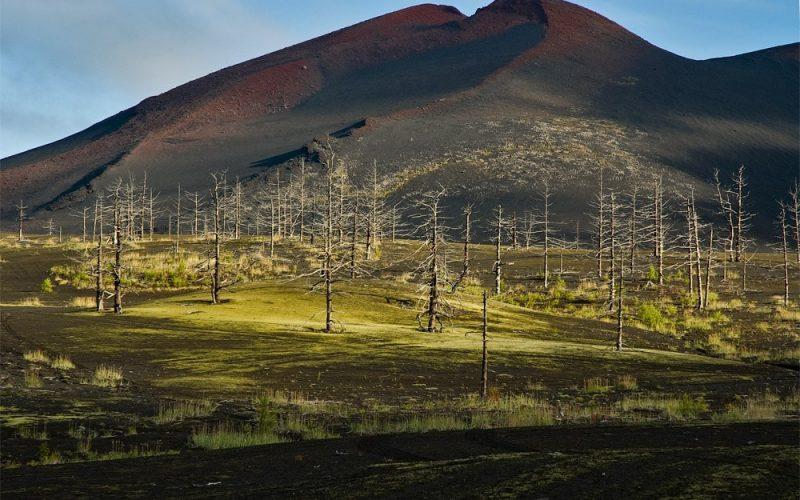 лес на марсе камчатка