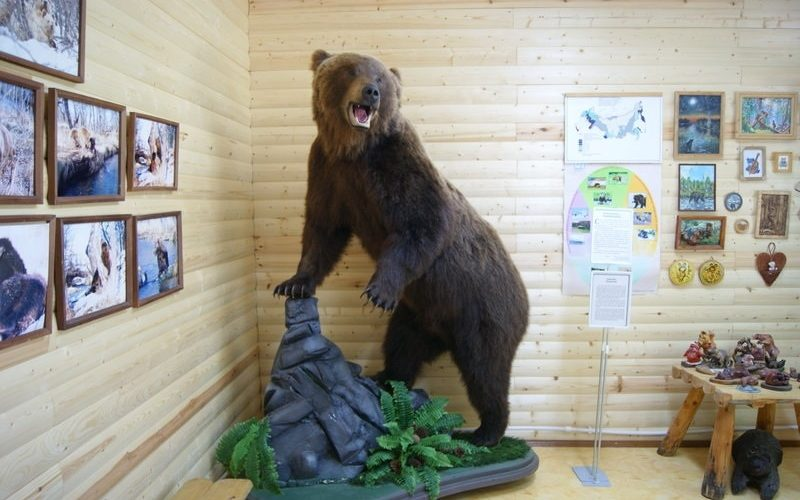 музей медведя камчатка