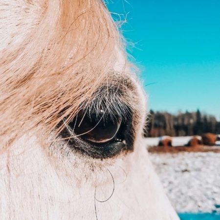 пеше-конный поход